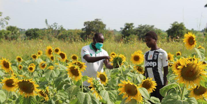 Niet-opgeleide jongeren worden ondernemende boeren in Noord-Oeganda