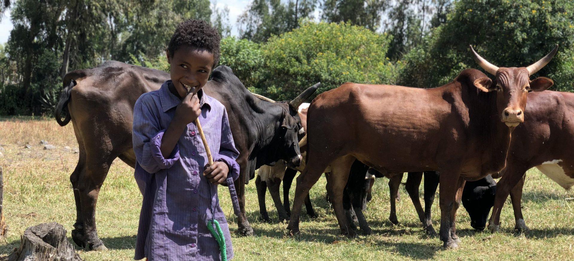 Adisu met het vee